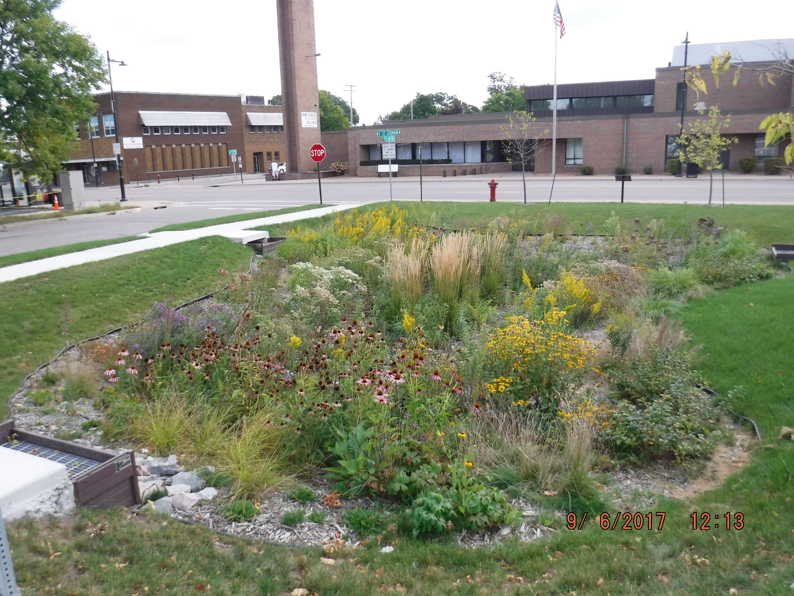 Rain Rain garden filled with wildflowers