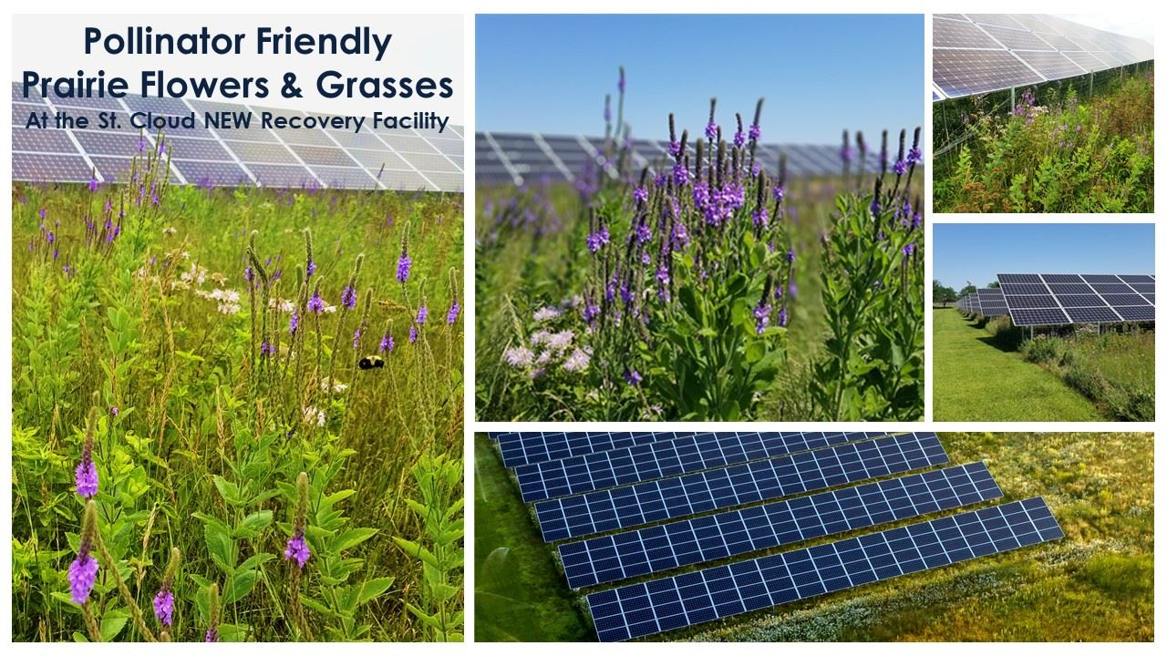 Collage of images of wildflowers and solar panels